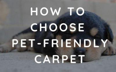 How to Choose Pet-Friendly Carpet