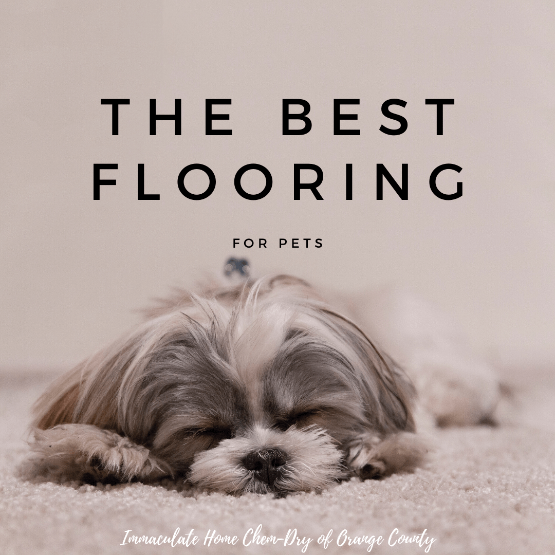 the best flooring for pets graphic