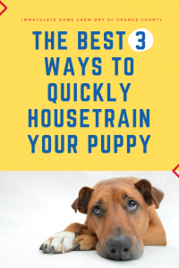 The Best 3 Ways to Quickly Housetrain Your Puppy