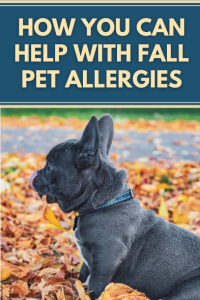 How You Can Help With Fall Pet Allergies
