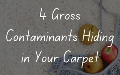 4 Gross Contaminants Hiding in Your Carpet
