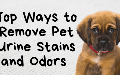 Top Ways to Remove Pet Urine Stains and Odors