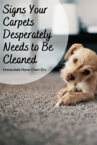 Signs Your Carpet Desperately Needs to Be Cleaned